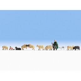 Troupeau de moutons et son...