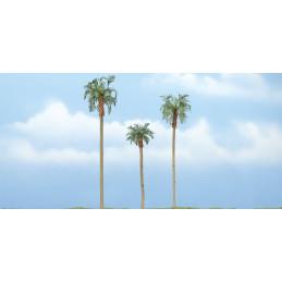 Palmiers royal